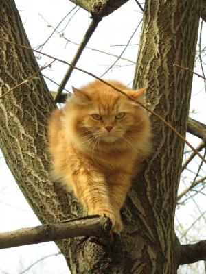 Как избавиться от кошачьей шерсти? Домашние заботы - Город Между Мирами